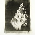 Photo Emulsion Prints